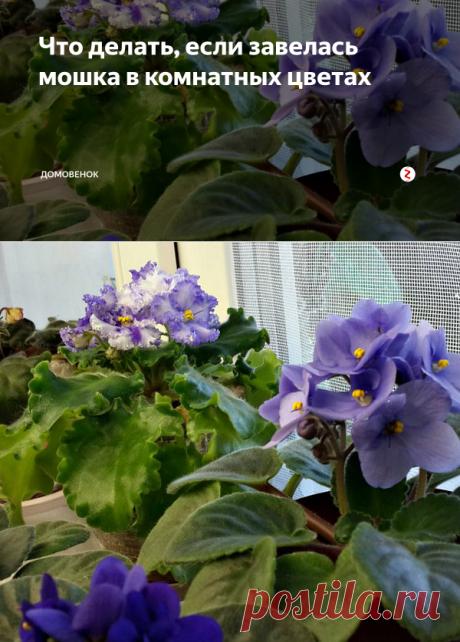 Что делать, если завелась мошка в комнатных цветах | Домовенок | Яндекс Дзен