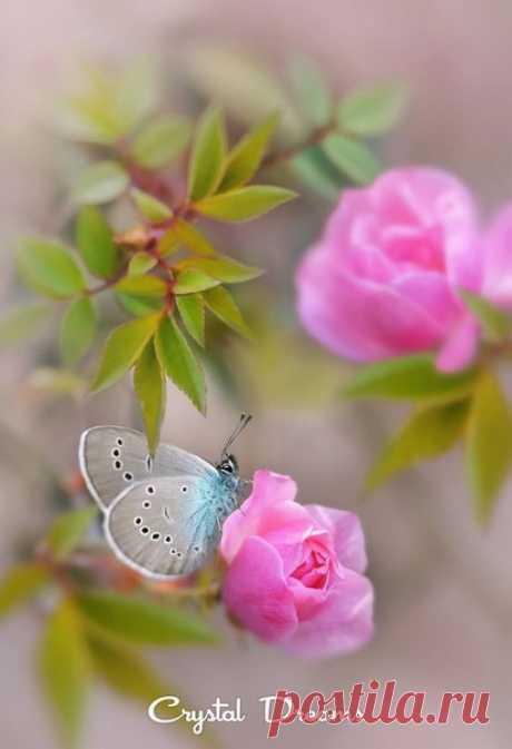 И пусть с утра Вам Счастье улыбнётся, Удача осенит своим крылом. А душу нежно-нежно греет Солнце, И счастье бабочкой впорхнет в ваш Дом !