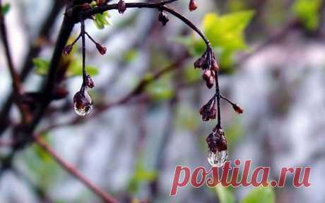 Апрель (Оксана Залилова) / Стихи.ру
