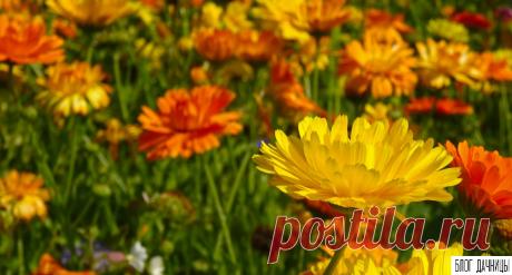 Как сочетать цветы в клумбе | БЛОГ ДАЧНИЦЫ | Яндекс Дзен