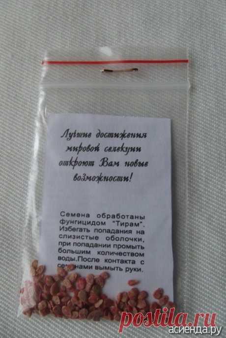 Как подготовить семена помидоров (томатов для посева. / Асиенда.ру