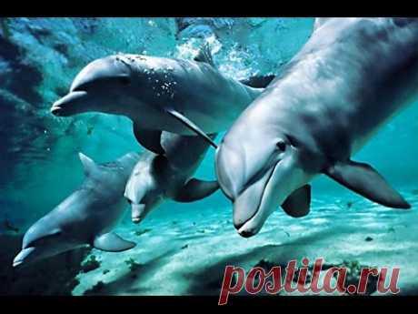 Песни дельфинов о Любви - Большая подборка ТОЛЬКО интересного и прикольного видео из YouTube
