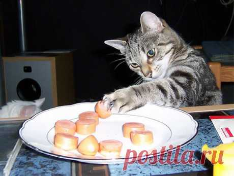 Эй, воришка: 25 смешных фото про котов, которые стаскивают еду - Летидор