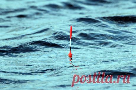 Топ-7 секретов рыбалки на поплавок | Блоги о даче и огороде, рецептах, красоте и правильном питании, рыбалке, ремонте и интерьере