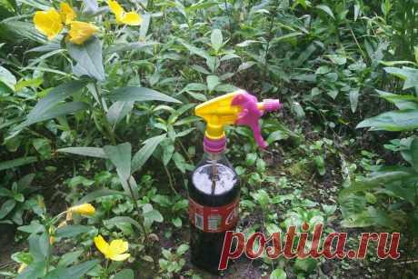 Как обычная «Кока-кола» облегчает уход за садом