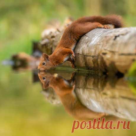 Красота дикой природы на снимках Дика ван Дуйна — Российское фото
