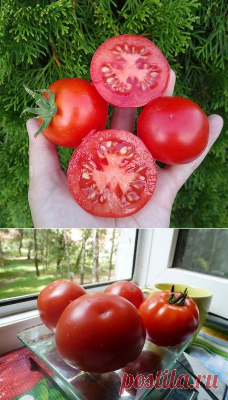 Легендарные сорта помидоров из СССР, никогда не подводившие огородников | посуДАЧИм об огороде | Яндекс Дзен