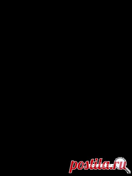 jeżówka, jeżówka Maria,echinacea, echinacea Maria
