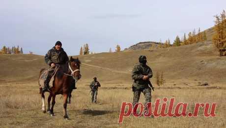 Охота на браконьеров. Алтайский заповедник в Сибири   Видео дня