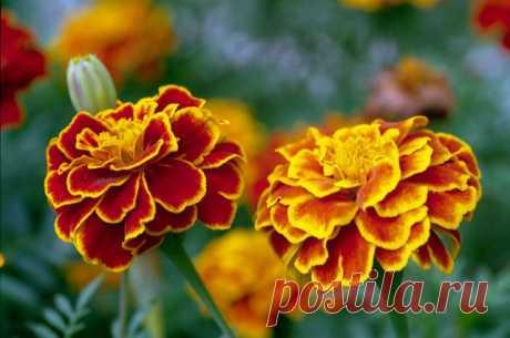 Собираем семена цветов: 7 правил — 6 соток