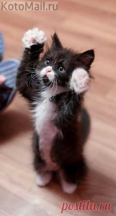 Хочу на руки!