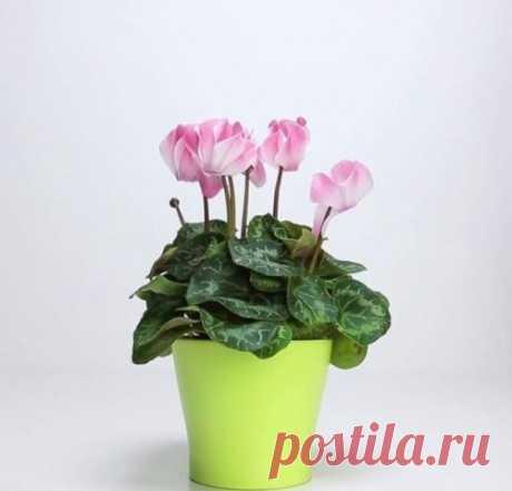3 ингредиента, которые вернут жизнь любимому растению! — Полезные советы