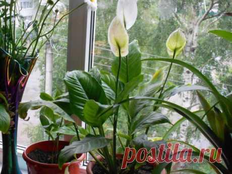 очень люблю цветы, хочу поделиться с вами , мои друзья !!!