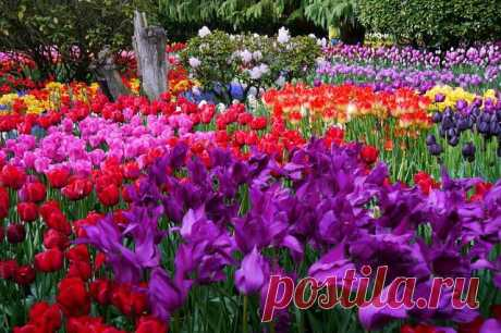 Великолепное, захватывающее, вдохновляющее шоу цветов.