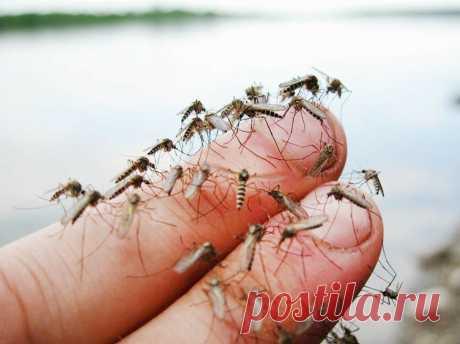 Друг из тайги поделился рабочими способами защиты от клещей, комаров и других насекомых | Рыбалка для души | Яндекс Дзен