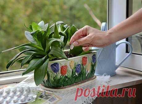 (+1) - Дрожжи – отличное удобрение для растений | ОГОРОД БЕЗ ХЛОПОТ