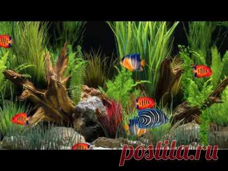 Аквариум с рыбками - вода - пузыри - релакс - YouTube
