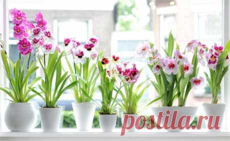 9 хитростей, чтобы орхидея всегда цвела. Животные и растения. Добавила Milana Kovaleva — VilingStore.net