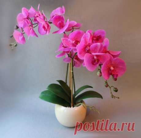 Как правильно поливать комнатную орхидею во время цветения