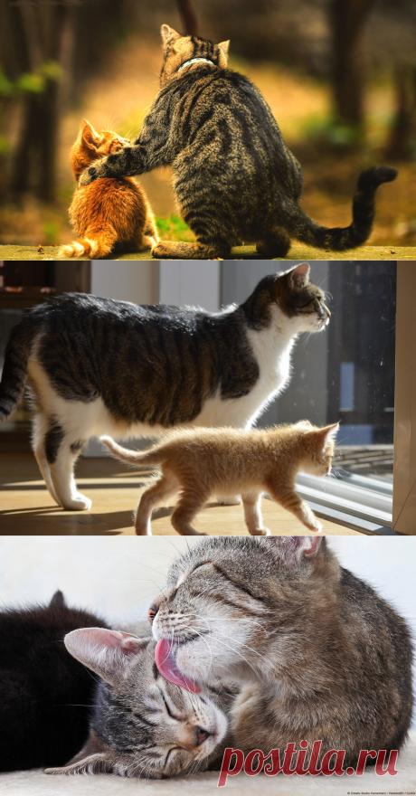 Как подружить взрослую кошку и маленького котёнка | PetZona.Ru | Яндекс Дзен