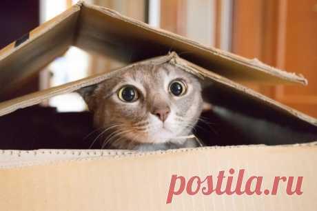 12 лучших анекдотов про котиков всех времен — www.wday.ru