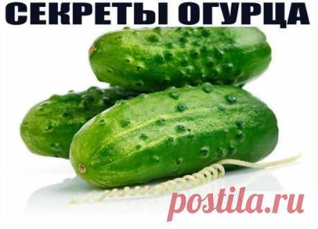 СЕКРЕТЫ ОГУРЦА  А вы знали, что такой привычный для нас овощ как огурец, который можно вырастить на грядке, либо купить в любом супермаркете, обладает поразительными и непривычными для нас свойствами? Вот несколько рекомендаций о том, как можно использовать обычный огурец в различных жизненных ситуациях: Огурец содержит все необходимые человеку витамины: В1, В2, В3, В5, В6, витамин С; фолиевую кислоту, железо, кальций, фосфор, магний, калий, цинк. ▶ Чувствуете усталость во второй половине дня? Н