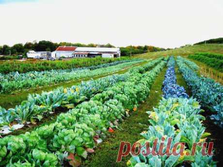 36 и 1 ХИТРЫЙ СОВЕТ ДЛЯ САДОВОДОВ И ОГОРОДНИКОВ - Экологическое землетворчество | Экологическое землетворчество