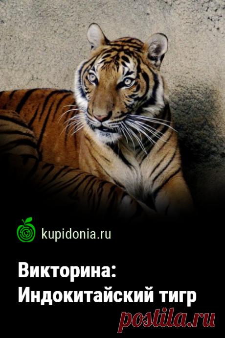 Викторина: Индокитайский тигр. Интересный тест из серии о диких животных об индокитайском тигре. Проверьте свои знания!