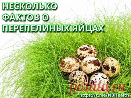 😃То, о чем вы не знали о перепелиных яйцах