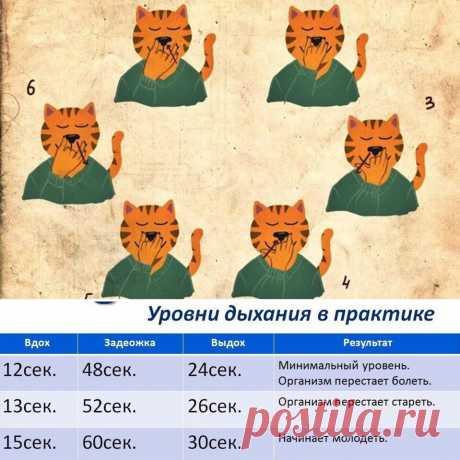 Учёные нашли древнюю йога технику бессмертия!   Евгений Кичигин   Яндекс Дзен