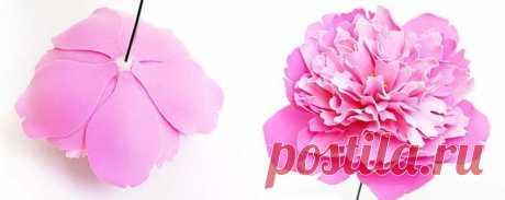 Цветы из фоамирана: мастер-класс для начинающих, схемы, шаблоны
