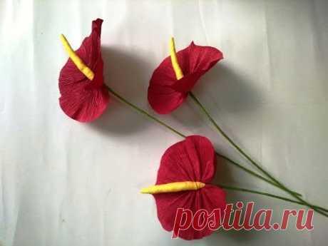 DIY - craft tutorial How to make paper flower - Anthuriums - Làm hoa hồng môn giấy nhún