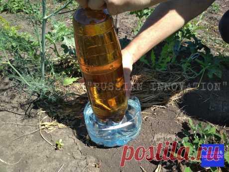 Увидел полезную самоделку для огорода из пластиковых бутылок и трубы и сделал себе такую же. Получился отменный капельный полив | RUSSIAN INNOVATION | Яндекс Дзен