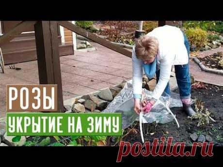 УКРЫТИЕ РОЗ НА ЗИМУ 🌹 Просто и эффективно / Садовый гид