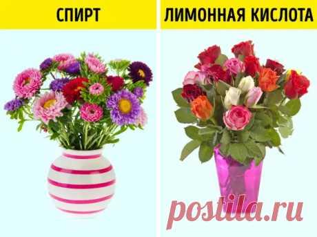 Странные и эффективные способы оживить цветы, о которых знают только флористы - Полезные советы - медиаплатформа МирТесен