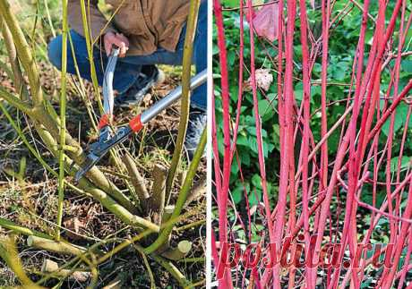 Оформление участка поделками из веток, лозы и травы. Красивые и практичные идеи - Дачный участок - медиаплатформа МирТесен