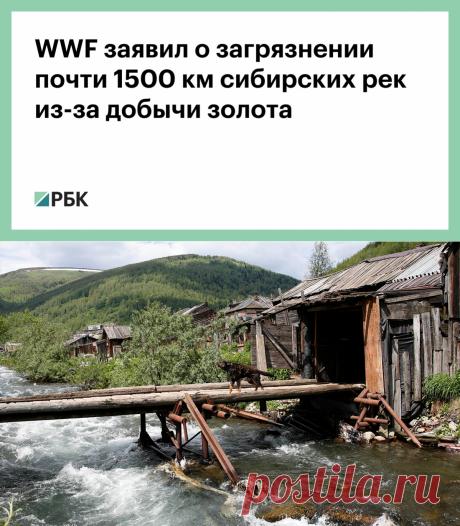 11-7-21-WWF заявил о загрязнении почти 1500 км сибирских рек из-за добычи золота :: Общество :: РБК