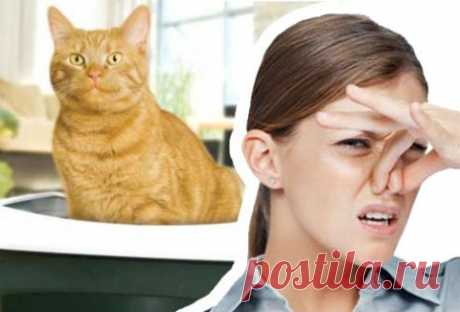Устраняем кошачий запах дома — Делимся советами