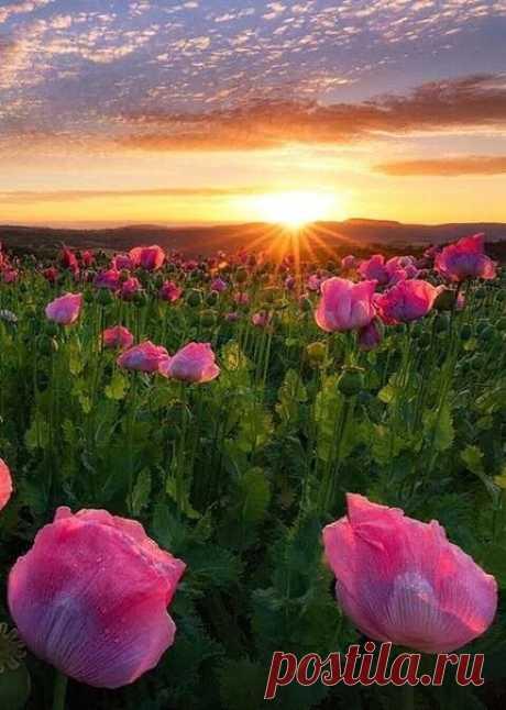 Меня всегда интересовало, как живут люди, не замечающие красоты вокруг? Должно быть, им невероятно скучно в их сером мире, где закатное солнце не гладит небо своими лучами, не поют на рассвете соловьи и не дарят свой волшебный аромат чудесные цветы…  = Лана Лэнц =