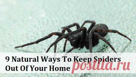 9 Natural Ways To Keep Spiders Out Of Your Home | Myhealthytricks.com
