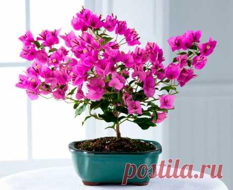 Секреты по уходу за цветами — Садоводка