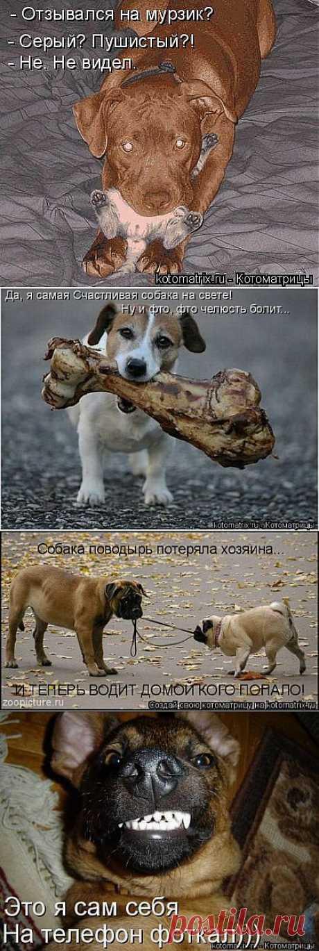 эти смешные собаки:
