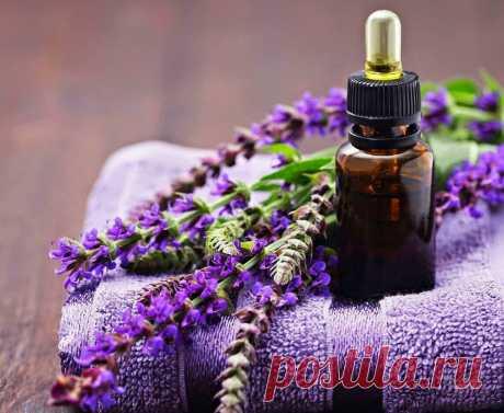 ༺🌸༻Эфирное масло шалфея - свойства и применение Применение свойств эфирного масла шалфея для волос. Использование масла шалфея мускатного в косметологии и народной медицине.