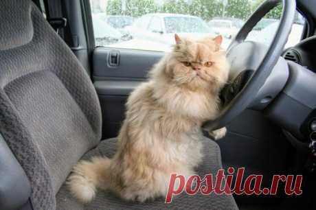 Личный водитель:)