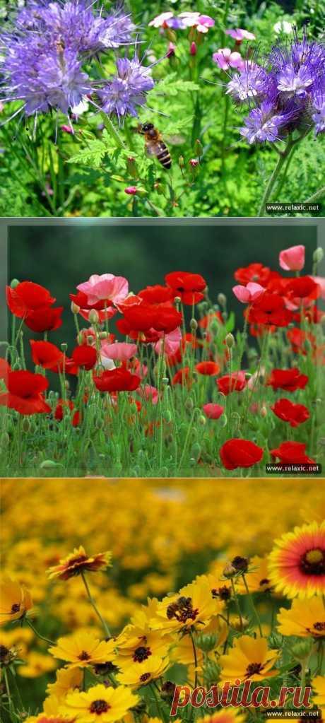 Яркие цветы прошлого лета | САД НА ПОДОКОННИКЕ