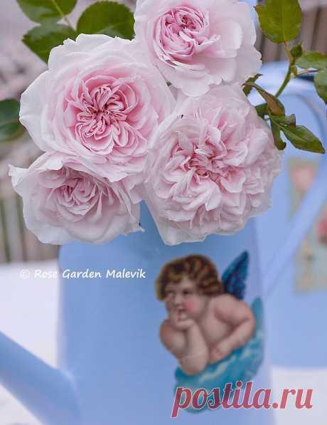 Цветочные композициии от ROSE GARDEN Malevik