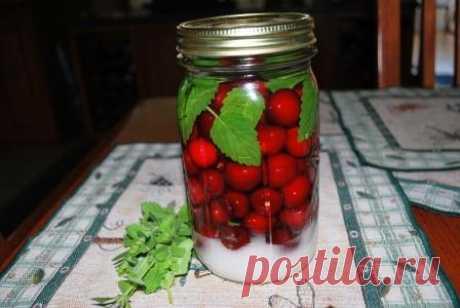 Как сделать наливку в домашних условиях: рецепты из ягод, вишни, смородины - Бабушкины секреты
