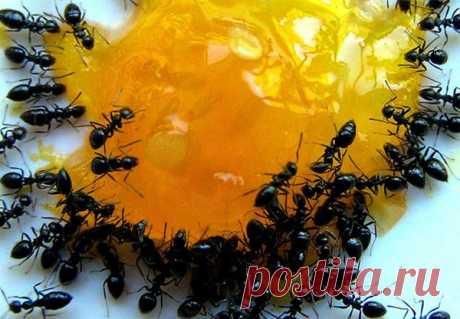 Как вывести муравьев с дачного участка навсегда? | Любимая Дача | Яндекс Дзен