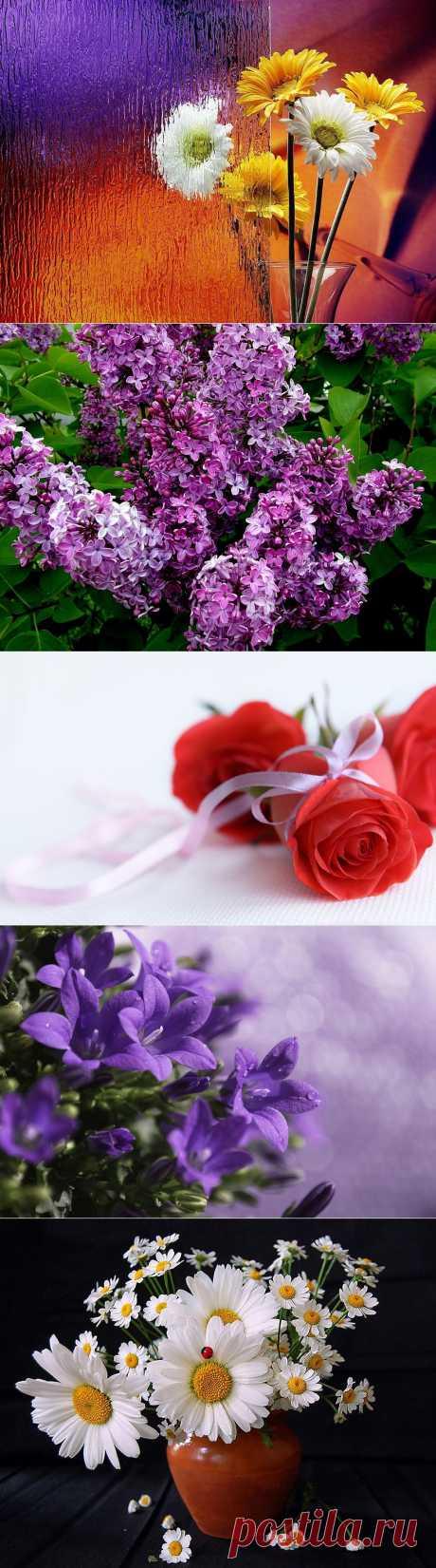 Потрясающе красивые обои на рабочий стол-Цветы.