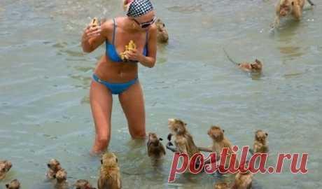 50 интересных и смешных пляжных фотографий - Urapress.com